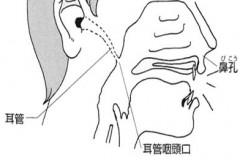 耳管について 難聴.com